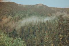 Lulang Forest, Nyingchi, Tibet