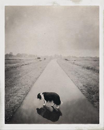#lostdogs #walkingthedog #dutchlandscape #waterland #raindogs