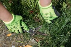Gärtnerin schneidet Gras mit einer Grasschere