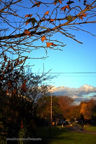 En el camino del otoño