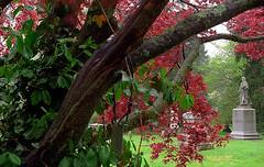 "Cincinnati - Spring Grove Cemetery & Arboretum ""Springtime Framing The Book Reader"""