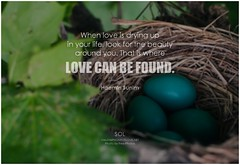 Haemin Sunim When love is drying up in your life, look for the beauty around you. That is where love can be found