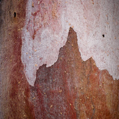Winter Bark ii