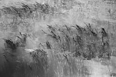 Reflections - Maramec Spring Park - monochrome