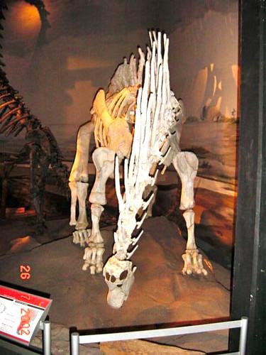 363 Tre esquelets 09