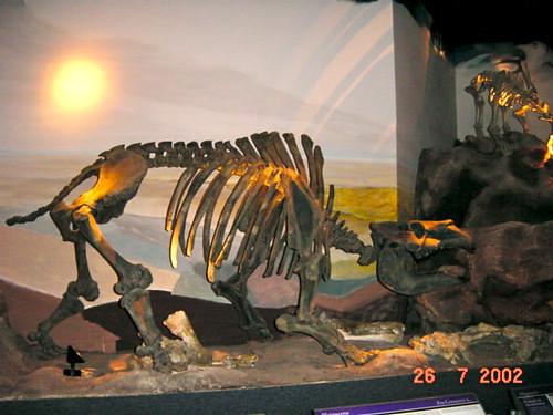 361 Tre esquelets 07