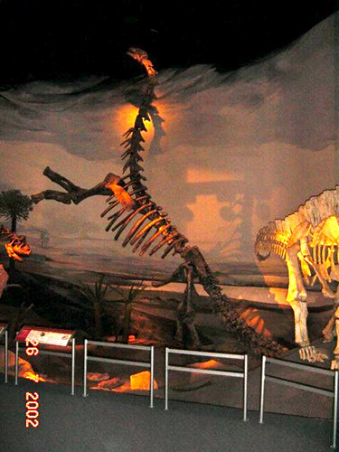 354 Tre esquelets 01