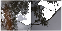 Billabong Reflections ii