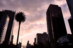 🌎AFTERNOON IN PASEO DE LA REFORMA MÉXICO CITY
