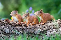 Ellie, Winnie and Bennie