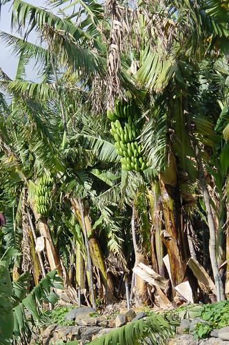 032 Vegetació