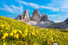 Tre Cime di Lavaredo and Flowers