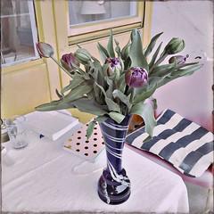 Der lila Lockdown-Tulpen-Strauß