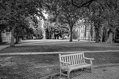 Campus Bench