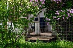 Van Bench Seat On The Porch