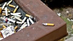 Discarded cigarettes in ashtray