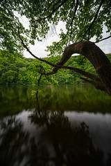 Tree on Lake Nisramont