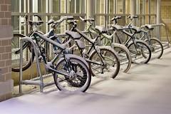Bicycles at Potomac Hall [02]