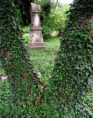 "Cincinnati - Spring Grove Cemetery & Arboretum ""Ivy All Over"""