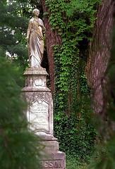 "Cincinnati - Spring Grove Cemetery & Arboretum ""Standing Tall"""