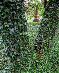 "Cincinnati - Spring Grove Cemetery & Arboretum ""Obelisk Through The Ivy Wish Bone"""