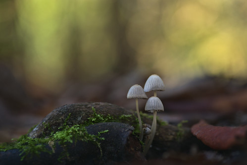 3 cute mushrooms on a mossy root