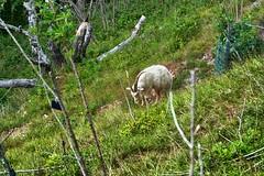 Goat Gulley Walk 2