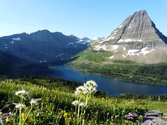 white flower at Hidden Lake