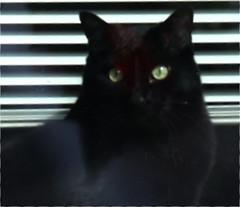 My Neighbors Black Cat