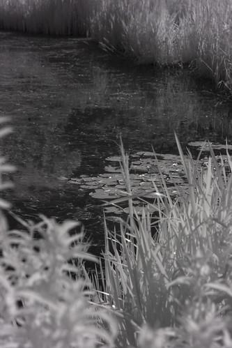 Belfield biodiversity lake  HMBT