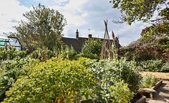 Fiona's Garden