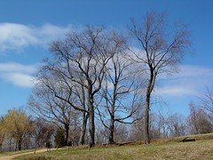 Trees on the grounds of Monticello
