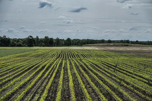 Farmers lines