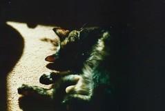 Suzy, Greenbank, Summer 1990