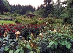 Rose Garden Portland oregon