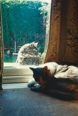 Suzy and Daisy, Greenbank, May 1990