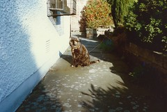 Suzy, Greenbank, May 1990