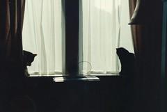 Daisy (left) and Suzy (right), Greenbank, 1990
