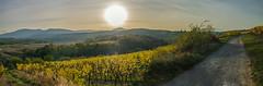 Le piémont des Vosges centrales