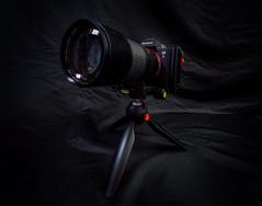 Sony a7RIII + Minolta Rokkor 200mm f/2.8