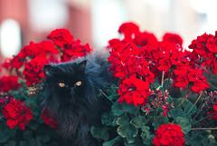 Beautiful Black Betty