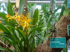 Leptote Jardin Botanique de Tourcoing