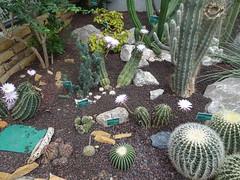 Echinocactus Jardin Botanique de Tourcoing