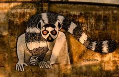 Freddy Parole Lemur