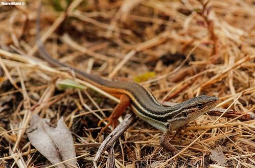Reptilian grass