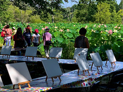 Lotus and Water Lily Festival