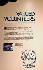 Valued Volunteers