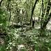 Poplar fluff covering the ravine floor