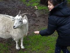 Gumeracha in the Adelaide Hills. Feeding a billy goat at the Worlds Biggest Rocking Horse animal park.