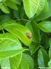 Bugs and Leaves